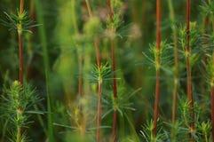 Grünpflanzen Lizenzfreies Stockbild