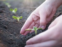 Grünpflanzen Lizenzfreie Stockfotografie
