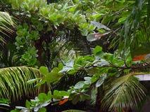 Grünpflanzen Stockbild