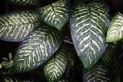 Grünpflanzen Stockfotografie