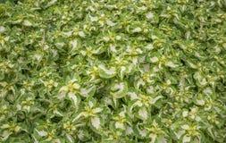 Grünpflanzen als Hintergrund Stockfotos