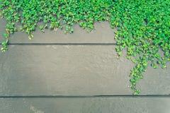 Grünpflanzen auf hölzernem Wandhintergrund mit Kopienraum Stockbilder