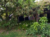 Grünpflanzen auf Jahreszeit der Morgenzeit im Frühjahr lizenzfreies stockfoto