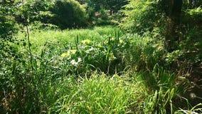 Grünpflanzen der Naturwanne in einem forrest stock video footage