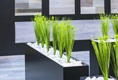 Grünpflanzen des Bürodekors in einem schwarzen rechteckigen Topf Stockbilder