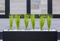 Grünpflanzen des Bürodekors in einem schwarzen rechteckigen Topf Stockbild