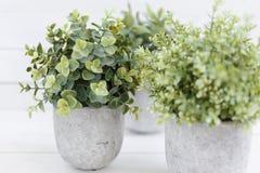 Grünpflanzen des Topfes stockbilder
