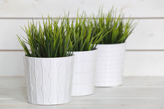 Grünpflanzen des Topfes lizenzfreie stockfotografie