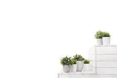 Grünpflanzen des Topfes lizenzfreie stockfotos