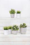 Grünpflanzen des Topfes stockfotos