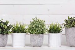Grünpflanzen des Topfes stockbild