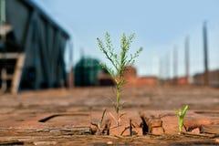 Grünpflanzen, die auf einem hölzernen Güterzuglastwagen wachsen Lizenzfreies Stockbild
