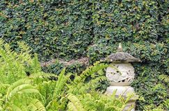 Grünpflanzen, die auf Wand im Garten wachsen Lizenzfreie Stockbilder