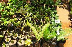 Grünpflanzen, die in einem Gewächshaus wachsen stockbilder