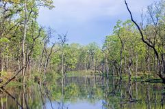 Grünpflanzen am Flussufer im Wald lizenzfreies stockbild