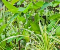 Grünpflanzen im Garten des Hauses Stockbild
