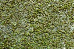 Grünpflanzen im Wald Lizenzfreie Stockfotos