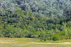 Grünpflanzen im Wald auf Hügel Lizenzfreies Stockbild