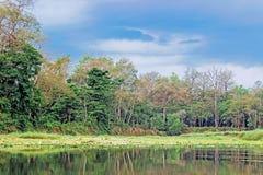 Grünpflanzen im Wald mit blauem Himmel Stockbild