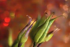 Grünpflanzen Makro-bokeh Hintergrund-Mehrfarbenzusammenfassung Stockfotos
