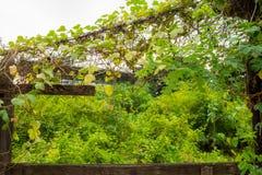 Grünpflanzen mit hölzernem und Efeurahmen lizenzfreies stockbild