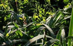 Grünpflanzen nach dem Regen Lizenzfreies Stockfoto