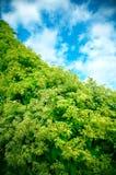 Grünpflanzen und blauer Himmel Stockfoto