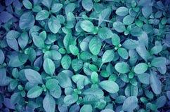 Grünpflanzen und Gras Fantacy Stockfotografie