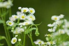 Grünpflanzen und kleine Blumen Stockfotos