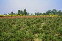 Grünpflanzen und rote Blumen im sonnigen Ackerland Lizenzfreie Stockfotografie