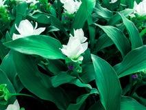 Grünpflanzen und weiße Blumen mit Nahaufnahmen im Tageslicht stockfotografie