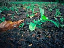 Grünpflanzen wachsen auf braunen Felsen mit Nahaufnahmen im Tageslicht lizenzfreie stockbilder