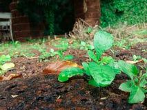 Grünpflanzen wachsen auf braunen Felsen mit Nahaufnahmen im Tageslicht lizenzfreie stockfotos