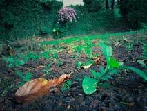 Grünpflanzen wachsen auf braunen Felsen mit Nahaufnahmen im Tageslicht stockfotos