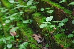 Grünpflanzen wachsen von der Ziegelsteintreppe Lizenzfreie Stockfotos