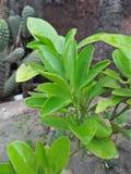 Grünpflanzeschönheit stockfotografie