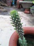 Grünpflanzeschönheit lizenzfreies stockbild