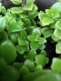 Grünpflanzeschönheit Stockfotos
