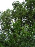Grünpflanzeschönheit Lizenzfreie Stockfotografie