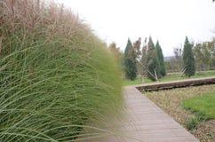 Grünpflanzestraße der Natur der Landschaft schöne lizenzfreies stockfoto