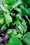 Grüns stockfoto