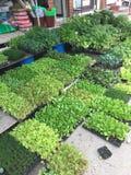 grüns Stockbilder