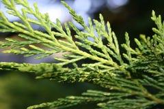 grüns stockbild