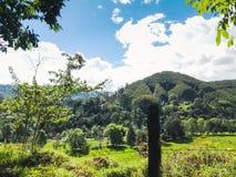 Grüns, Gras und Berge hinter Bäumen lizenzfreie stockbilder