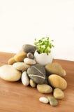 Grüns im Ei und in den Steinen Stockfoto
