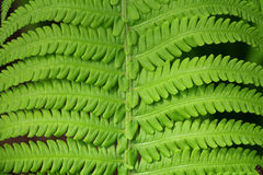 Grüns im Frühjahr Lizenzfreies Stockfoto