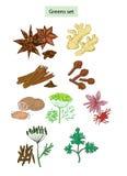 Grüns und Gewürze eingestellte Hand gezeichnete Abbildungen lizenzfreie abbildung
