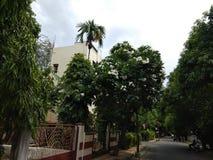 Grüns unter dem Beton lizenzfreie stockbilder