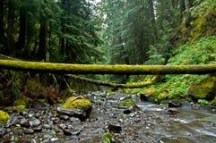 Grüns von Pin Creek Stockfotos