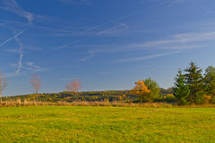 Grünwaldgrasgrün Horsetail des Naturverheerenden feuers wächst Feldhimmel Stockfotografie